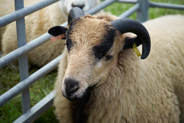 19 Things to do in the Lake District in 2019 herdwick sheep